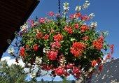 Chaudron fleuri