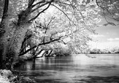 Printemps sur la rivière