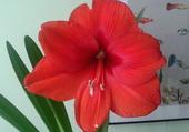 Ma fleur préférée !!