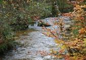 Rivière Le Tholy Vosges
