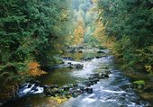Rivière dansla forêt