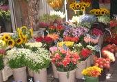Etal de fleurs à Amsterdam