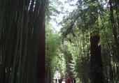 Entrée à la Bambouseraie