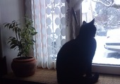 un chat en hiver