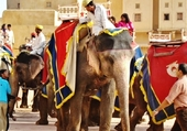 Elephant servant a nous monter au fort