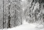 Allée dans la forêt enneigée