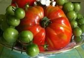 Cerises ou tomates ?? !!!
