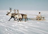 Puzzle inuits en traineau