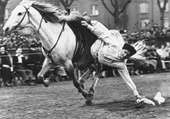 Cascadeur equestre
