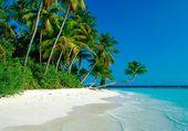 la plage paradisiaque