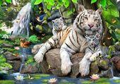 Maman Tigre et ses bébés