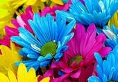 Pétales multicolores