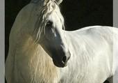 Cheval ibérique