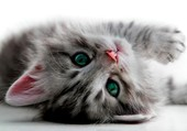 Un chaton espiègle...