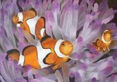 peinture de Némo dans les fonds marin
