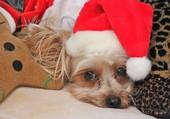 Puzzle Moi, j'aime pas Noël