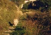 Rihoue à Murs Vaucluse