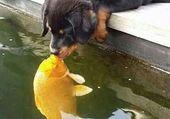 Puzzle poisson et chat