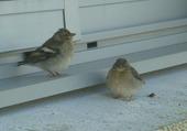 bébés oiseaux