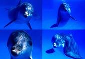 Des dauphins