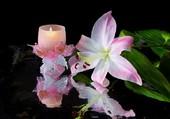 Orchidée à la bougie