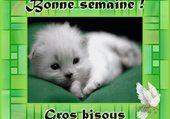 petit chat tout blanc
