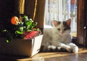 Le chaton au soleil