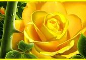 Puzzle Rose jaune