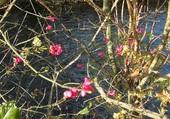 dernières fleurs d'automne