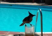 Oiseau ile Maurice