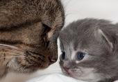 chaton & maman