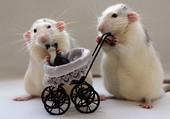 Puzzle Petits rats