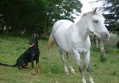 Toons et le cheval