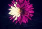 fleur violette et blanche
