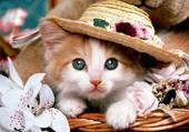 Un chat chapeauté