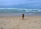 adorable chien a l'océan
