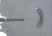 maître pêcheur