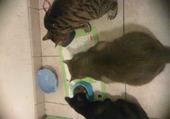 les 3 chats gourment