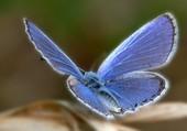Magnifique papillon bleu