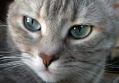 Puzzle Le chat...