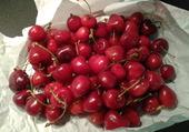 Bientot les cerises  !!