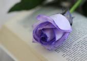 Une rose sur un livre