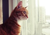 Puzzle Chat regardant par la fenêtre