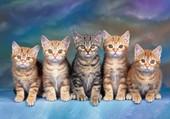 Cinq chatons tout mignons