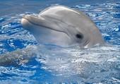 Puzzle Flipper le dauphin