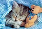 Je dors avec mon nounours