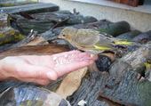 Oiseaux pas sauvage...