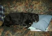La sieste de Paco