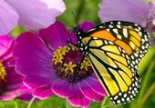 Puzzle Papillon qui butine