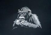 chimpanzé par Blondel